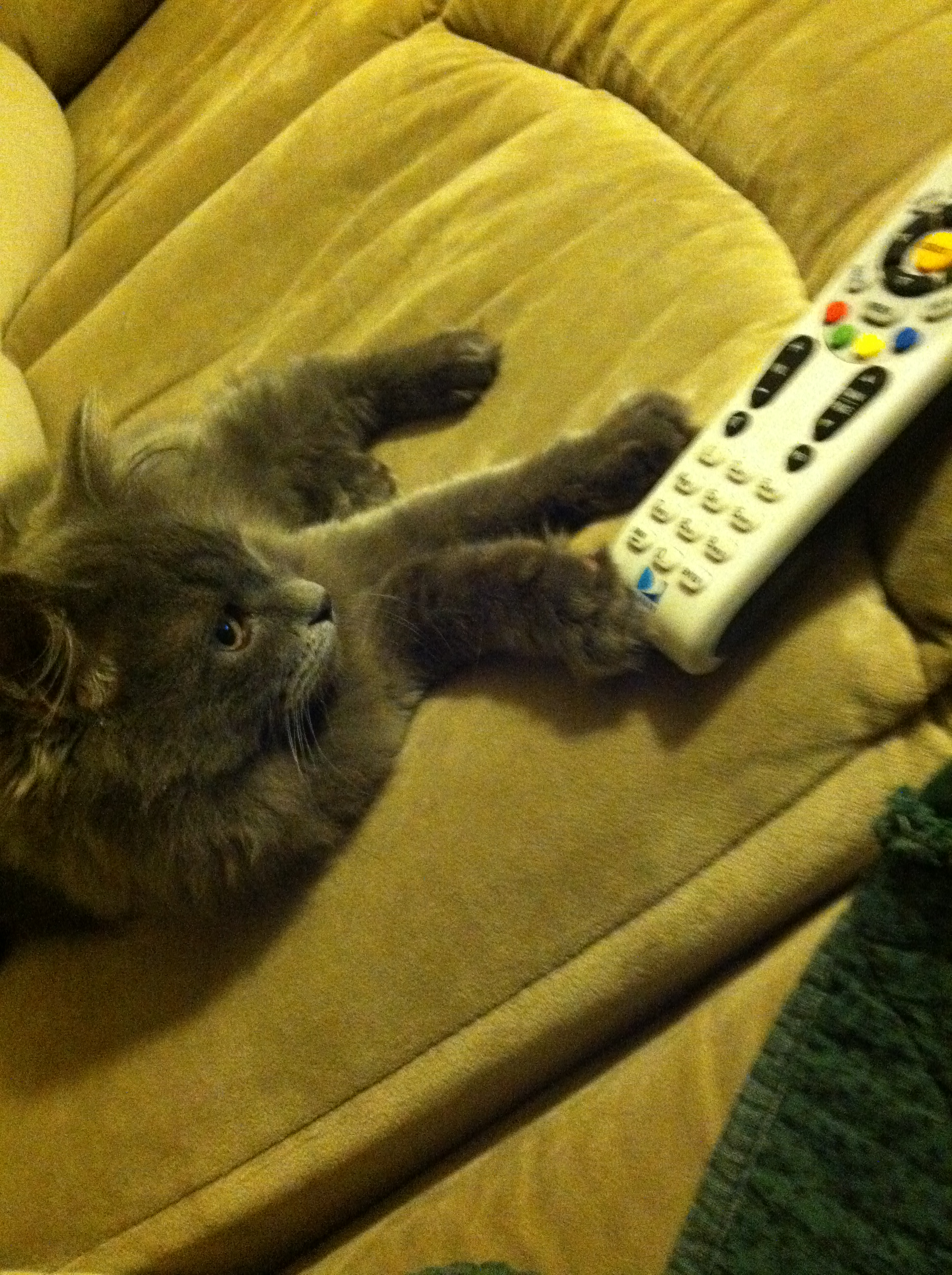 meeko and remote