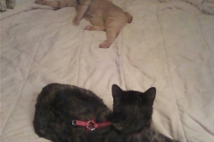 sheba and skeeter camping with new mom and dad
