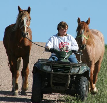 Moving horses with a 4-wheeler