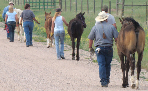 Moving yearlings