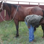 a woman picks up her new horses foot for the first time