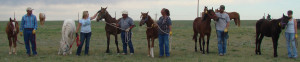 A group of new trainers prepare to release their yearling horse into a new pasture