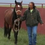 A new owner walks with her new horse as they start to build a relationship