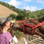 A horse reaches for a treat as she learns to kiss